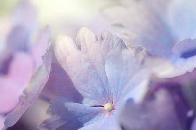 Photograph - In Pursuit Of Purple 2 by Fraida Gutovich