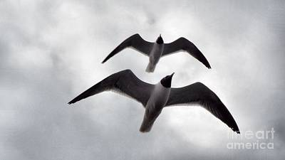 Photograph - In Sync Flying by Audrey Van Tassell