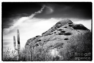 Photograph - In The Arizona Desert by John Rizzuto