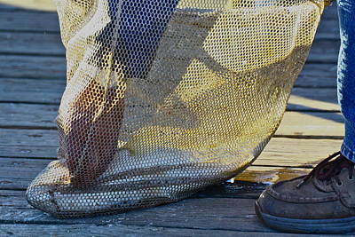 Photograph - In The Bag by Diana Hatcher
