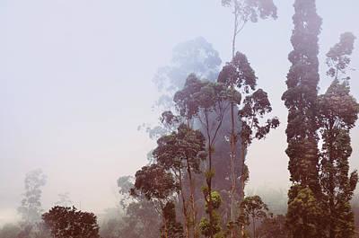 Photograph - In The Blue Silence. Nuwara Eliya by Jenny Rainbow