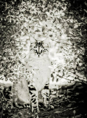 Photograph - In The Bush by Kim Henderson