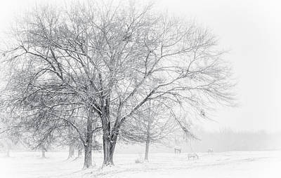 Photograph - In The Cold by David Waldrop