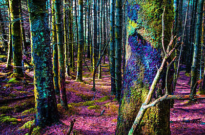 In The Colorful Wood. Rest And Be Thankful. Scotland Art Print by Jenny Rainbow