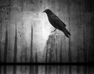 Crow Image Photograph - In The Dark by Gothicrow Images