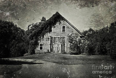 Barn In The Woods Photograph - In The Days by K Hines