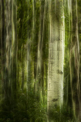 Photograph - In The Depth Of The Forest by Kasandra Sproson