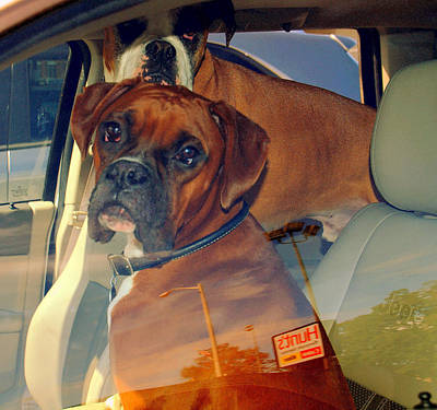Photograph - In The Driver ' S  Seat by Caroline Stella