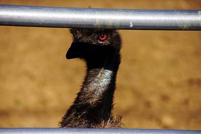 Photograph - In The Eye Of The Emu by Michael Courtney