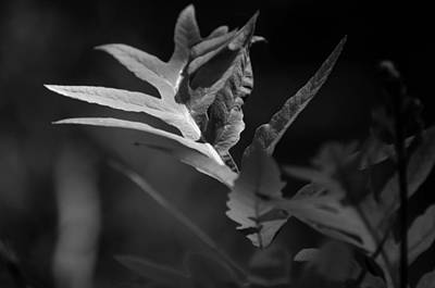 Photograph - In The Fern by Rebecca Sherman
