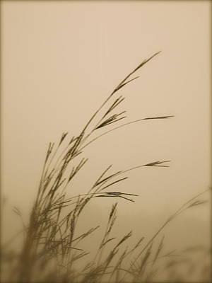 In The Fog Art Print by Tim Good
