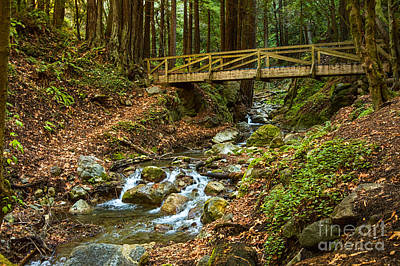 Photograph - In The Forest - Limekiln State Park In California by Jamie Pham