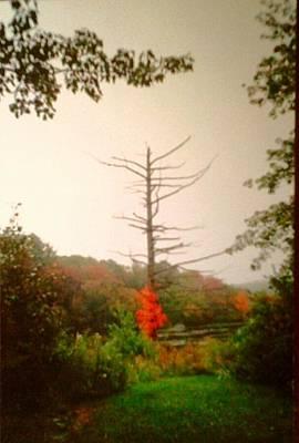 Thomas Kinkade - In The Forest by Carol Bono