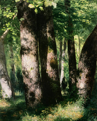 In The Forest Of Fontainebleau Art Print