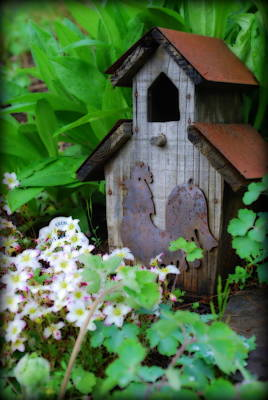 Photograph - In The Garden by Kathy Sampson