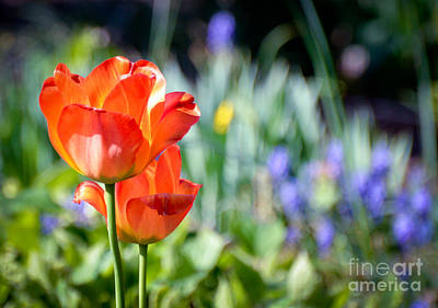 Photograph - In The Garden by Kerri Farley