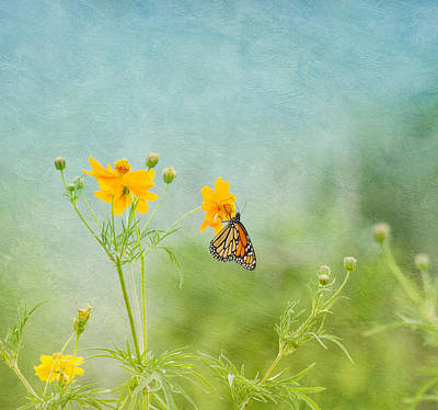 In The Garden - Monarch Butterfly Art Print by Kim Hojnacki