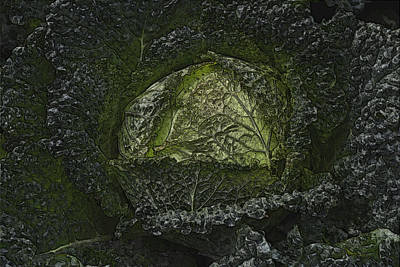 Photograph - In The Garden - Savoy Cabbage by Nadalyn Larsen