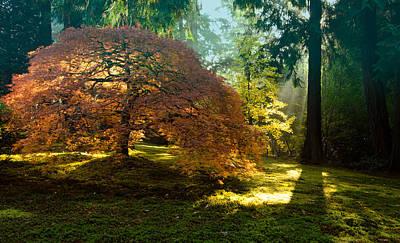 In The Gentle Autumn Light Art Print by Don Schwartz