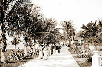 In The Grounds Of The Royal Poinciana, Palm Beach, Fla Art Print by Litz Collection