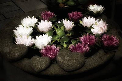 Heart Stone Photograph - Romantic Lily Pads by Richard Cummings