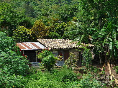 Photograph - In The Jungle House by Lew Davis
