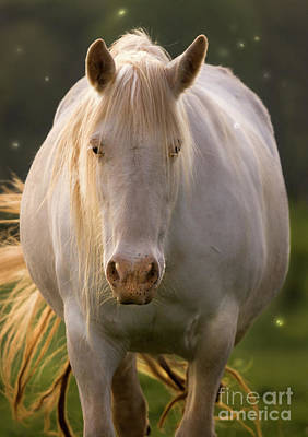 White Unicorn Photograph - In The Land Of  Unicorns by Angel  Tarantella
