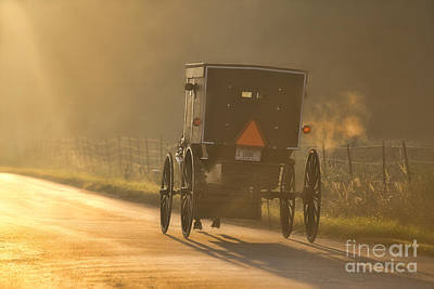 Amish Photograph - In The Light by David Arment