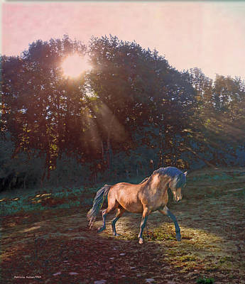 Paso Fino Photograph - In The Light by Patricia Keller