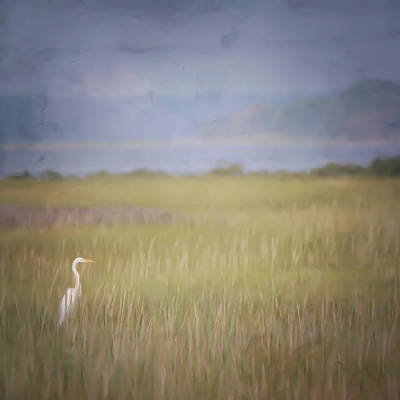 Print featuring the photograph In The Marsh  by Kerri Farley
