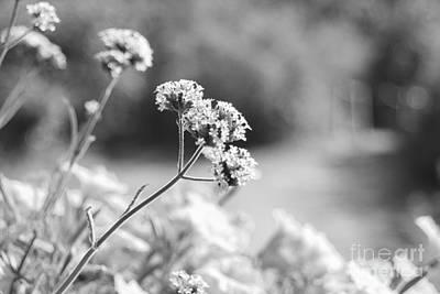 Photograph - In The Meadow by Barbara Bardzik