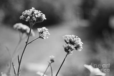 Photograph - In The Meadow II by Barbara Bardzik