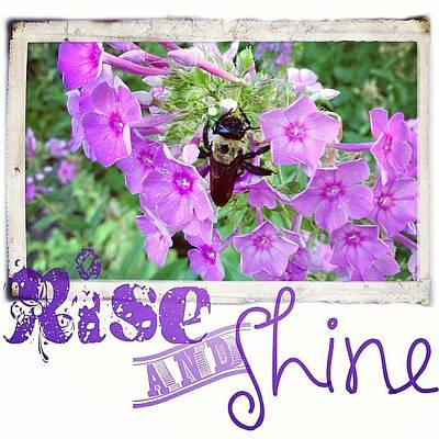 Purple Wall Art - Photograph - In The Morning There Are Several Bees by Teresa Mucha
