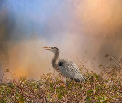 In The Nest - Great Blue Heron Art Print by Kim Hojnacki