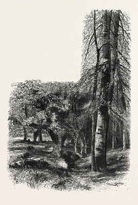 In The New Forest, Near Lyndhurst, The Forest Scenery Art Print by English School