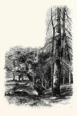 In The New Forest, Near Lyndhurst, Uk, Britain Art Print by English School