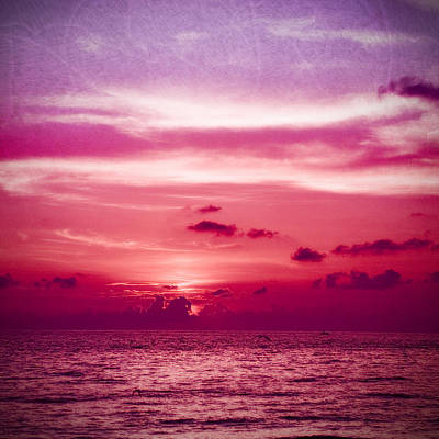 Photograph - In The Pink At Sand Key by Beverly Stapleton