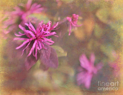 Photograph - In The Pink by Judi Bagwell