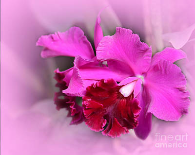 Photograph - In The Pink by Sabrina L Ryan