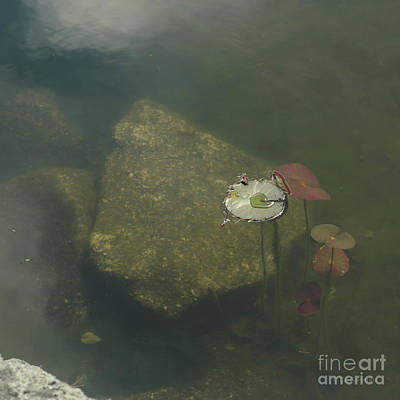 Photograph - In The Pond by Carol Lynn Coronios