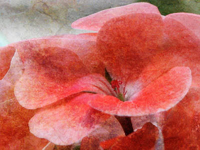 Photograph - In The Right Light - Pink Flower - Textured by Marie Jamieson