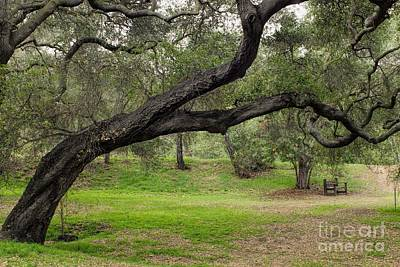 Photograph - In The Shade Of Old Oaks by Peggy Hughes