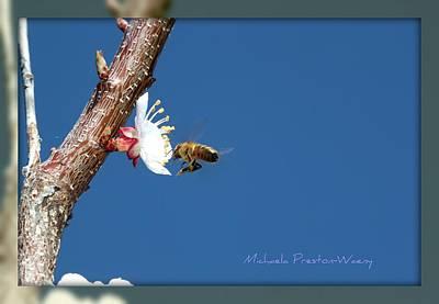 Photograph - In The Sky by Michaela Preston