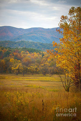 Photograph - In The Smokies by Lena Auxier