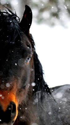 Photograph - In The Snow by Emily Stauring
