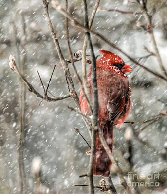 Photograph - In The Snowstorm by Kerri Farley