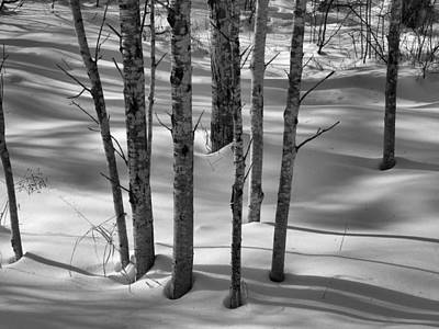 Photograph - In The Snowy Woods by Gene Cyr