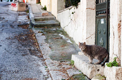 Photograph - In The Streets Of Athens by Laura Melis