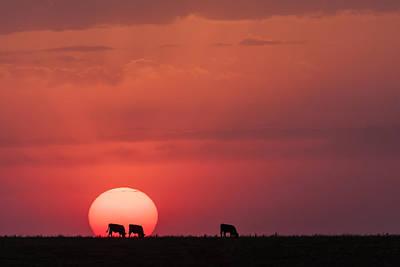 Photograph - In The Sun by Scott Bean