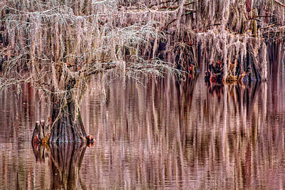 In The Swamp Art Print by Matt Harvey